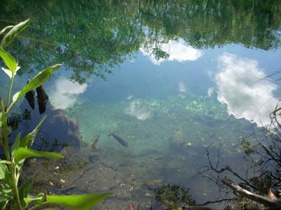 Cenote Escondido in Tulum