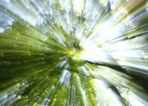 iStock creation trees and sun