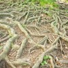 istock roots reduced